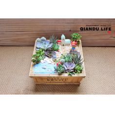夏洛特花园 《童话》多肉植物组合拼盘 盆栽 微景观 小盆景